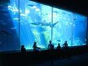 Club Azuli at The Aquarium