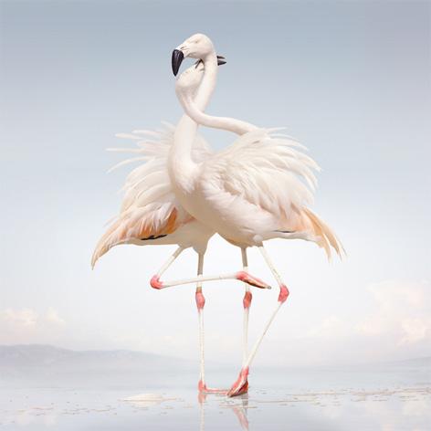 Cover Rustie - Raptor